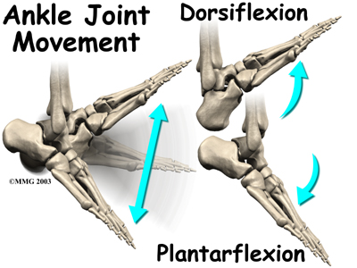 Ankle Join Movement